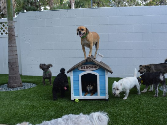 Artificial Grass Photos: Synthetic Grass Cost Frazier Park, California Fake Grass For Dogs, Dogs